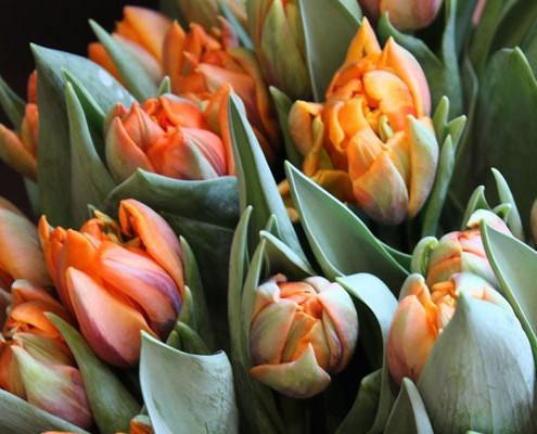 Saisonale Floristik Blume & Beiwerk München